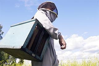 Лаванда та Бджільництво